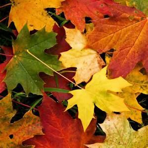 *Photo: wordpress.com